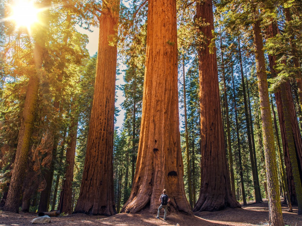 sequoia-national-park-california-usa